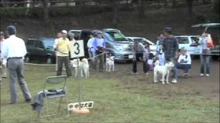 平成22年10月17日撮影。 紀州犬四国犬甲斐犬が登場。神奈川支部の...