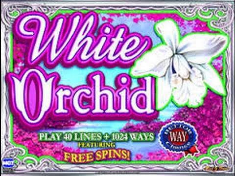 White Orchid Slot Machine Casino Wins