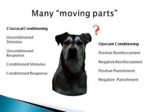 Classical Conditioning Explained