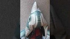 Delfin Pop