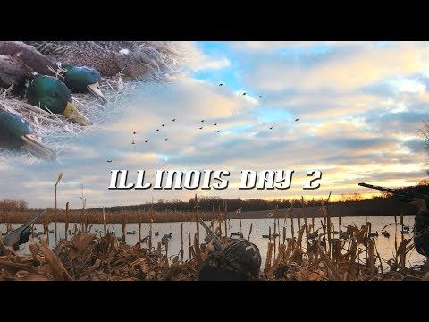 Illinois Duck Hunt MALLARDS EVERYWHERE!