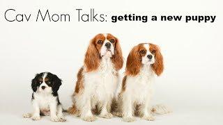 MOVING ON AFTER LOSING A DOG Cav Mom Talks