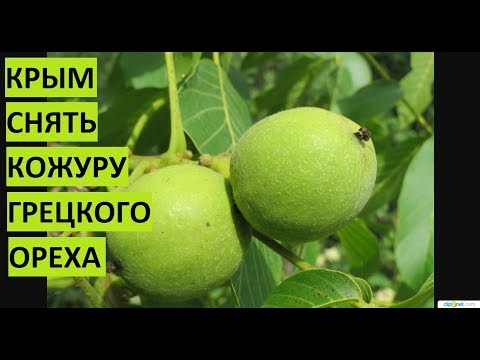 Крым. Снять кожуру с грецкого ореха. thumbnail