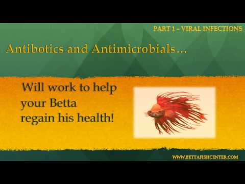 Betta Fish Diseases And Treatments - Part 1