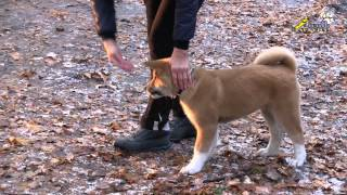 Смотреть видео дрессировка щенка