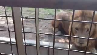 大分県にある九州自然動物公園アフリカンサファリへ行きました。 チャン...