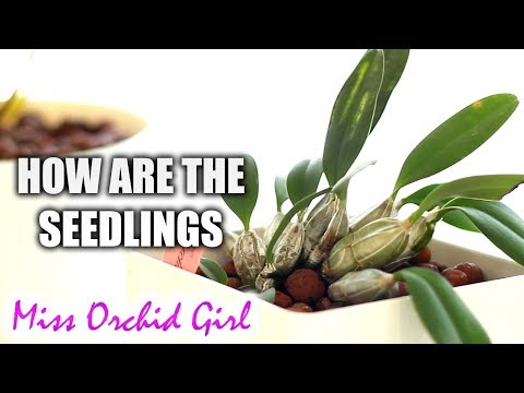Orchid Stories #4 - The seedlings & thoughts on growing them