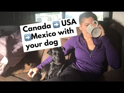 Canada To USA To Mexico With Your Dog.