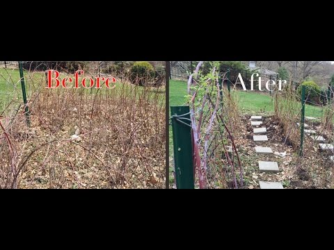 Reclaiming the Raspberry Patch with a Garden Trellis