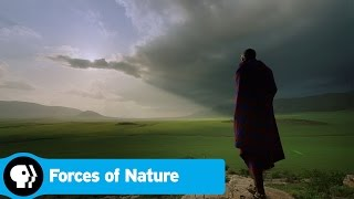FORCES OF NATURE | Official Trailer | PBS