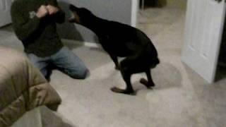 Attack of Roberman the Doberman!