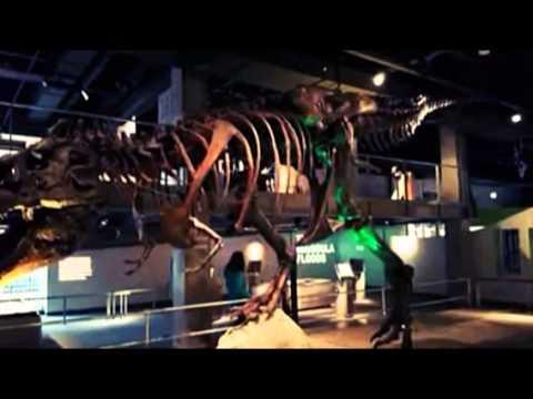 Sue The Dinosaur - Fossilized Tyrannosaurus Rex