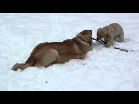 Snowstorm Stick Play