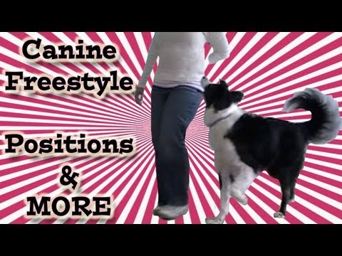 Canine Freestyle & Heel work to music - Clicker Training