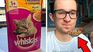 Можно ли есть кошачий корм?