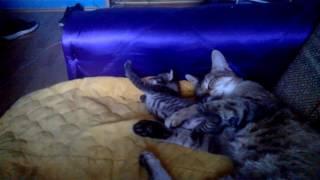Kitten Update  3 Weeks Old