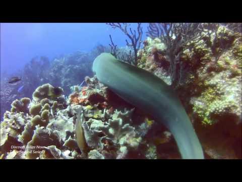 iDive Belize Turneffe Atoll Series