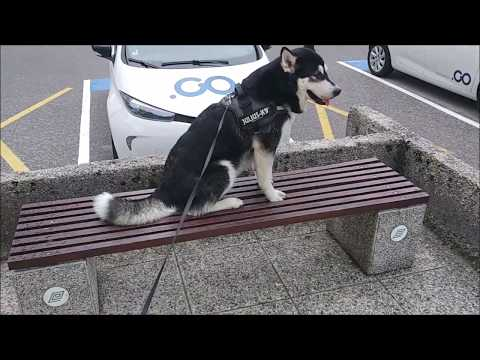 Some events in the life of an Alaskan Malamute #14
