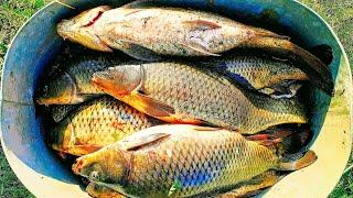 Рыбалка 2021 Опустил камеру в воду и охренел сазаны на каждом забросе Лучшая рыбалка 2021