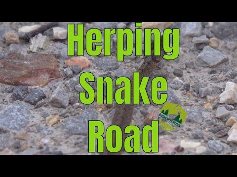 Snake Road | LaRue Pine Hills Research Natural Area | Spring Migration