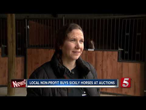Two dozen horses rescued from Tennessee auction