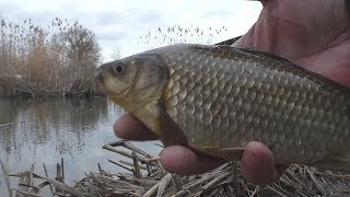Рыбалка  Ловля карасей на поплавок в камышах [в феврале]. My fishing
