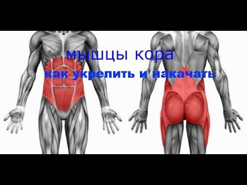 assasin:мышцы кора-как укрепить и накачать