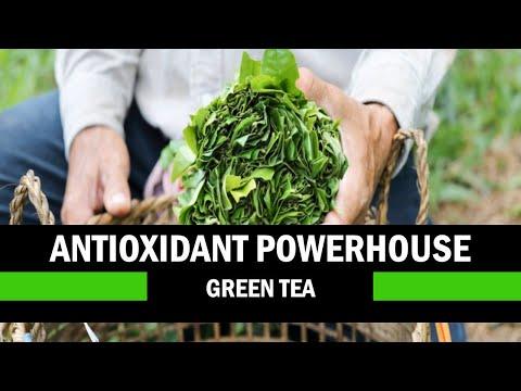 The Health Benefits Of Green Tea - Camellia Sinensis Var, Assamica