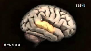 숙련된 독서가의 뇌, 그리고 뇌의 발달