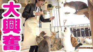提供:猫カフェMoCHA ▽猫カフェMoCHAの詳細はこちら http://catmocha.jp...