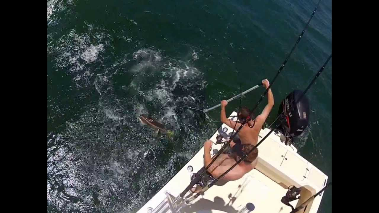 Cobia fishing oregon inlet nc youtube for Oregon out of state fishing license