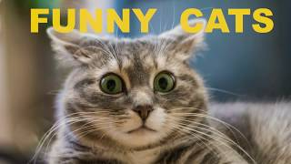 Funny cats, funny animals video