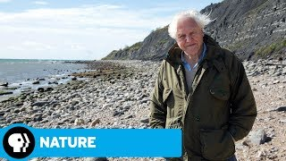 Attenborough and the Sea Dragon Preview | NATURE | PBS