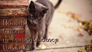 В доме не приживаются кошки. Почему?
