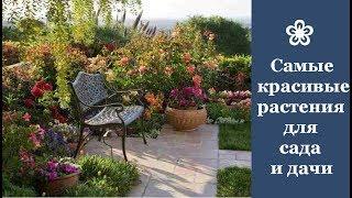 Самые красивые растения, которые стоит посадить в саду и на даче