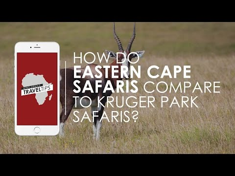 How do Eastern Cape Safaris compare to Kruger Park Safaris? Rhino Africa's Travel Tips