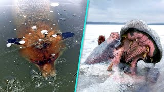 10 Animais Que Ficaram Congelados no Tempo