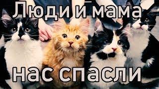 Беременная Кошка Пришла к Дверям Незнакомого Дома  Ей нужна была помощь  Насколько же кошки умные