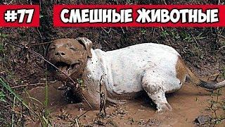 Смешные животные - собака в грязи | Bazuzu Video ТОП подборка 77 декабрь 2017