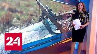 Литва распродала винтовки, подаренные США