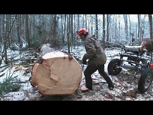 Live Edge Slabs From Big Trees