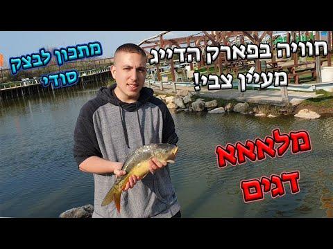 טירוף בפארק הדייג מעיין צבי🎣😱 | אין סוף לדגים!🐟 | דייג בוס וקפיץ + מתכון לבצק 💥