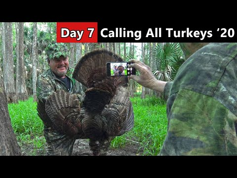 Black-Winged, Public Land Osceola - Florida Turkey Hunting - Calling All Turkeys
