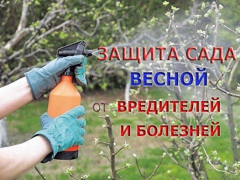 Защита сада от вредителей и болезней - весной