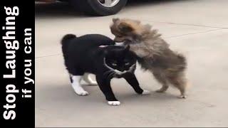 Dog v/s Cat | Funny Videos | Pet Lovers