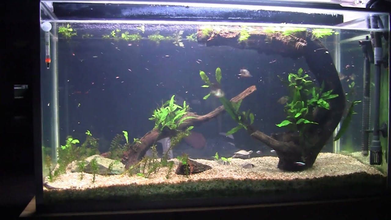 Mississipi map turtle/fish planted 55G tank review HD(feeding time ...