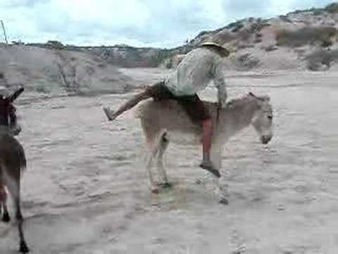 Donkey Show II