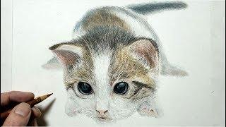色鉛筆でネコを描いてみた 子猫編 How to draw a cat