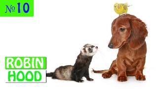 ПРИКОЛЫ 2017 с животными. Смешные Коты, Собаки, Попугаи // Funny Dogs Cats Compilation. Январь №10