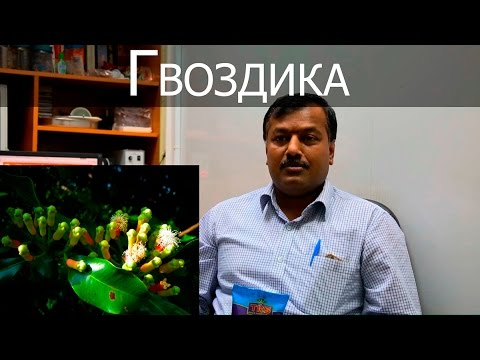 Цветок гвоздика: описание, выращивание, сорта
